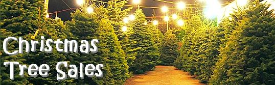 a Christmas Tree sales lot, with rows of green trees on either side of a path and electric lights strung overhead